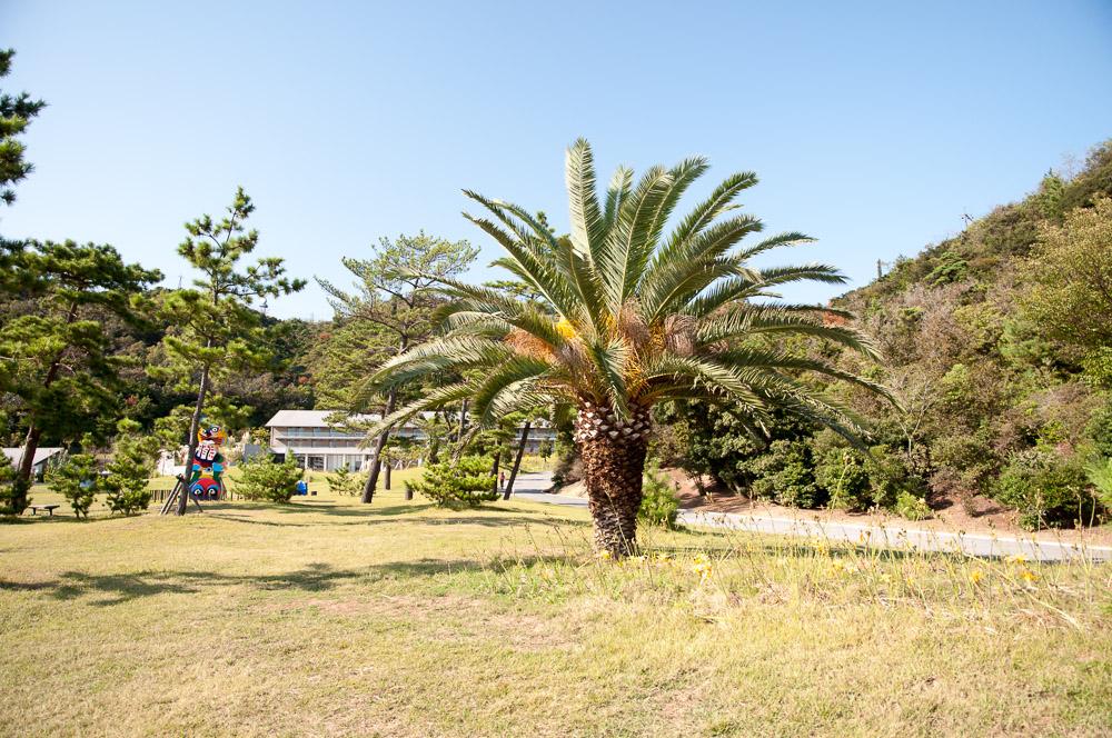 super palm