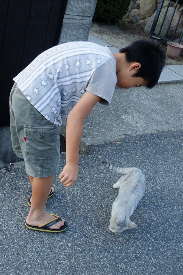 Boy playing with a cat