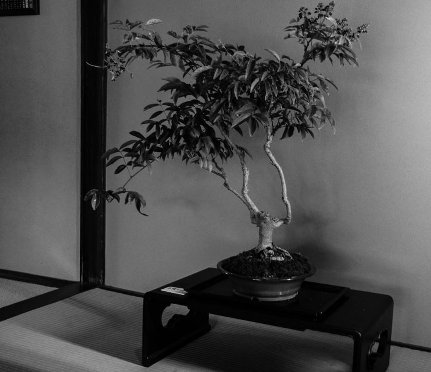 kanazawa_bonsai-2
