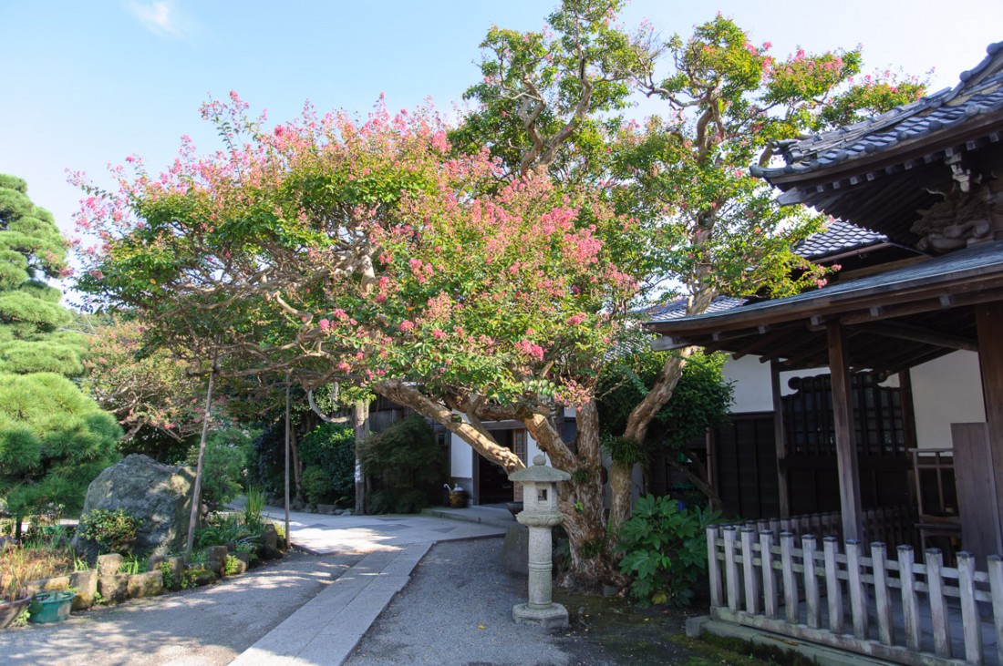 Kamakura_afternoonwalk-2